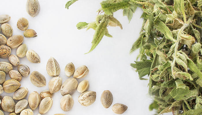 Start Shopping For Weed Seeds Now!
